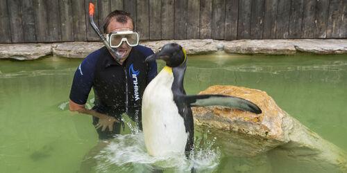 (-*♥*-)  Charlotte, le pingouin qui a peur de l'eau  (-*♥*-)