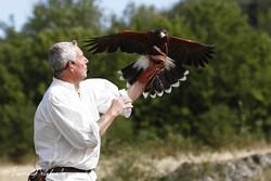 Les Ailes du Larzac (Philippe Rignault et ses oiseaux)