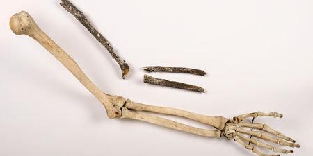 Bras pré-Néandertalien trouvé au bord de la Seine
