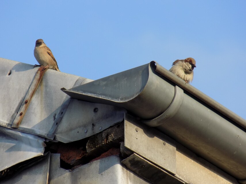 Mignons petits oiseaux