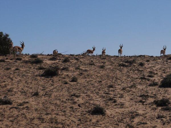 Un troupeau de gazelles