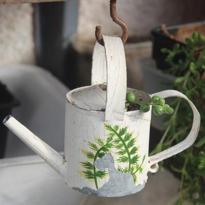 Senecio Rowleyanus ou Plante Chapelet - Bouture dans un petit arrosoir