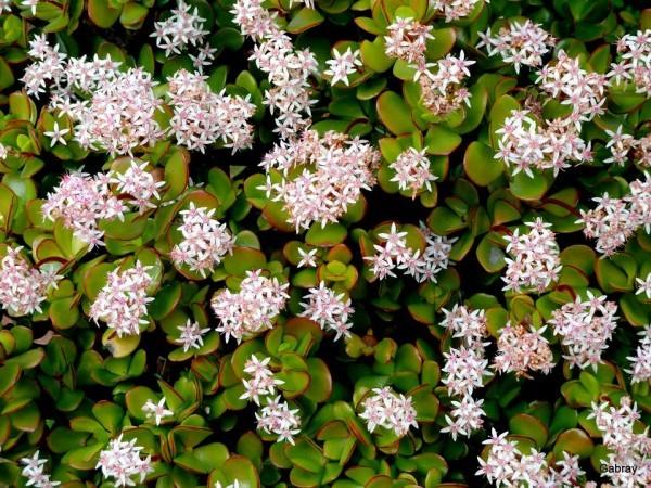 u02---Du-vert-et-des-fleurettes.JPG