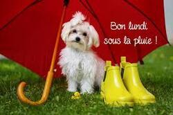 pluoi de lundi