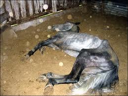 Les maltraitances animales