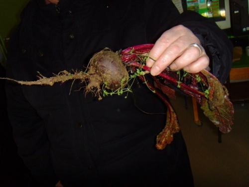 Dégustation de nos légumes