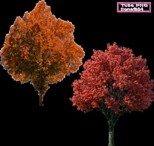 Tubes Arbres d'automne