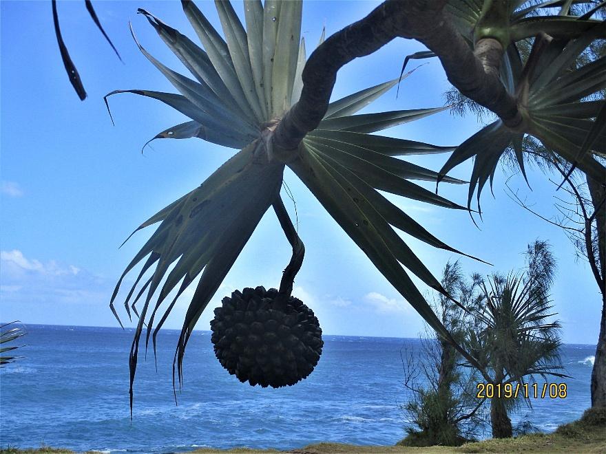 19/11/20 : Le Baril et Mer cassée à ST-PHILIPPE - Poésie