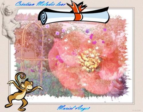 MA-Jardin-Roses-copiry.JPG