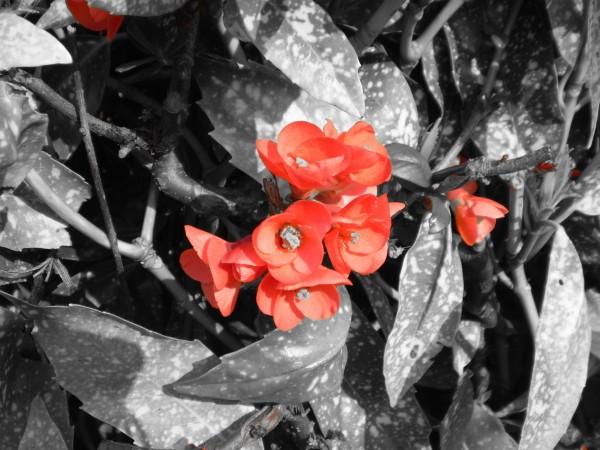 fleur tinti2