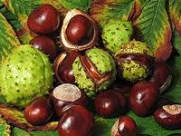 200px-Aesculus hippocastanum fruit