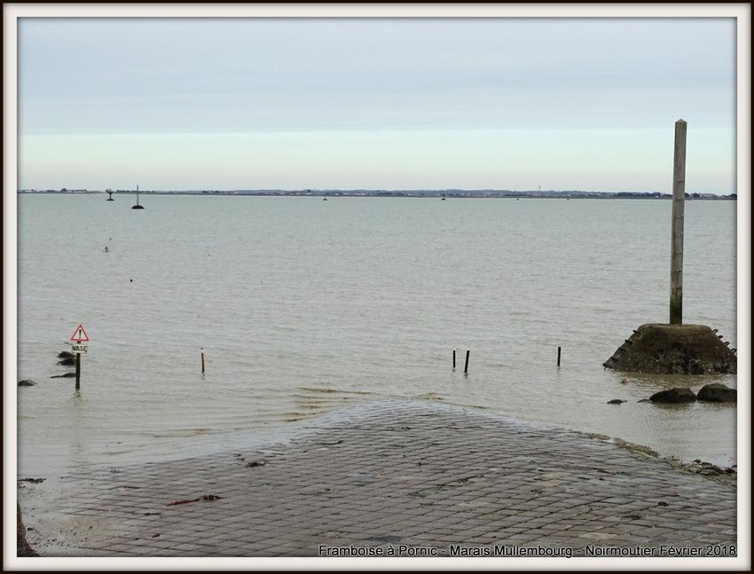 La gente à plumes de Noirmoutier - Février 2018
