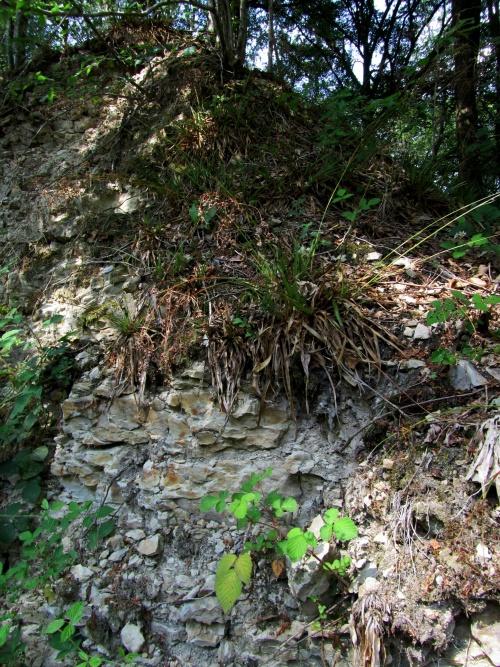 Botanique et Géologie  juin 2011