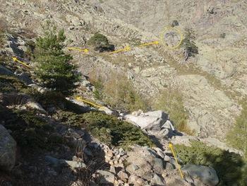 Le trajet vers le pin mort (cercle jaune) où commence la descente
