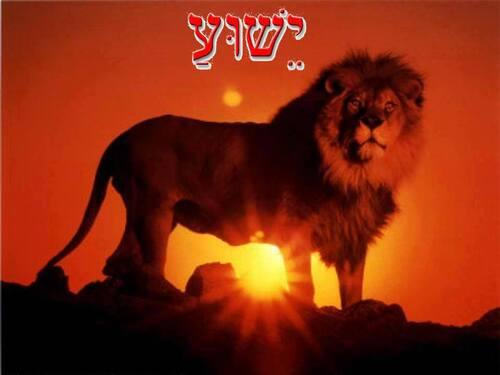 Shabbat Shalom !!