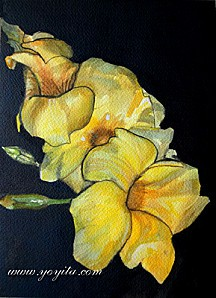 yellow-flowers-watercolor-s-yoyita