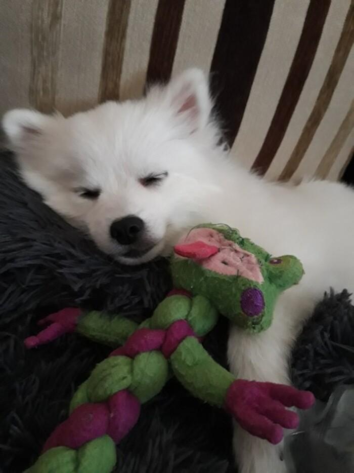 Ma nouvelle petite chienne PUCE