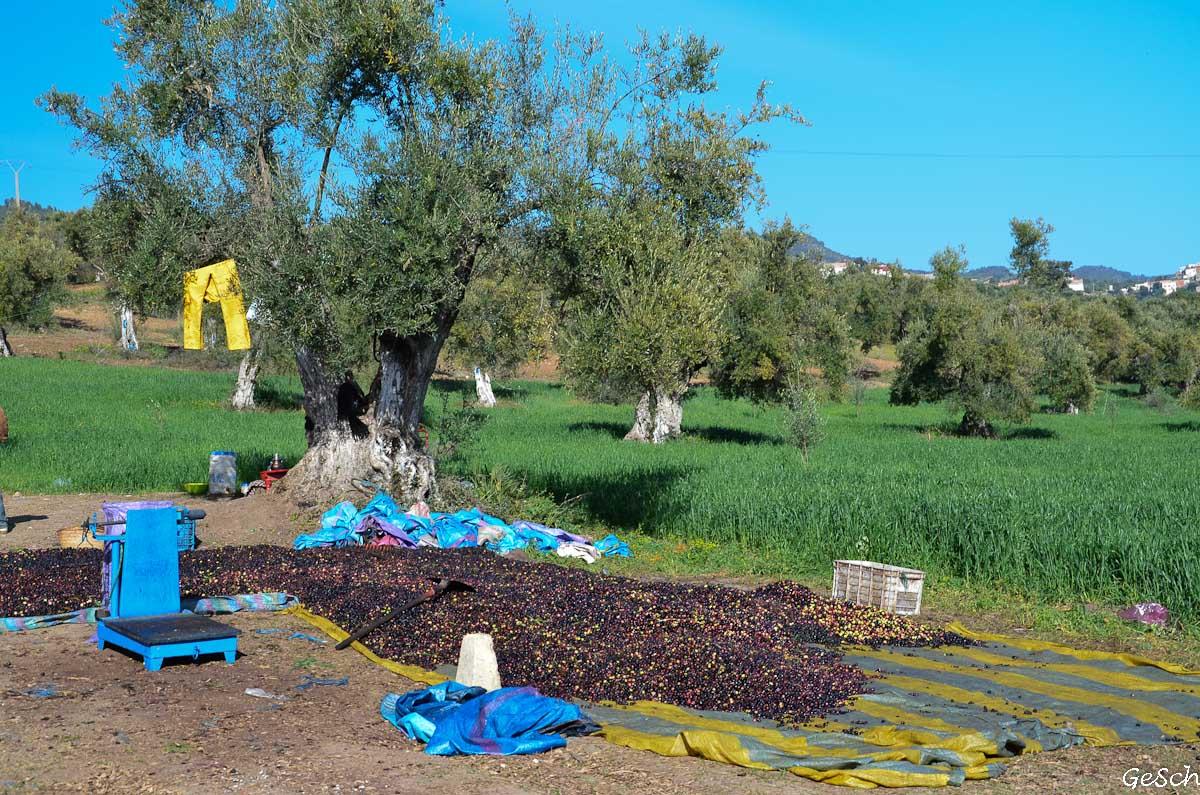 maroc volubilis  Moulay Idriss Zerhoun