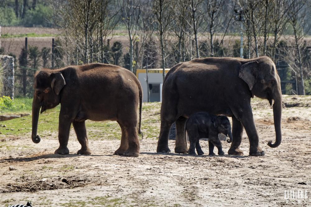 Farina (2 jours) et de la petite Malee née il y a un peu plus de 3 mois