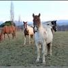 mes-beaux-chevaux.jpg