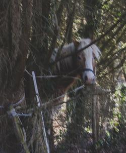 .Les chevaux.