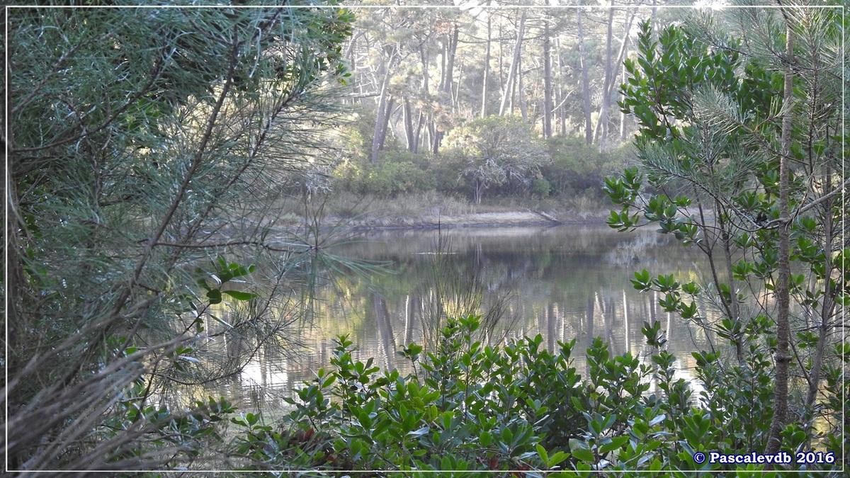 Les Réservoirs de Piraillan - Octobre 2016 - 6/10