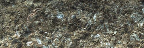 Petit cimetière fossile de l'ordovicien