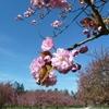 6 AVRIL 2011_4_1.JPG
