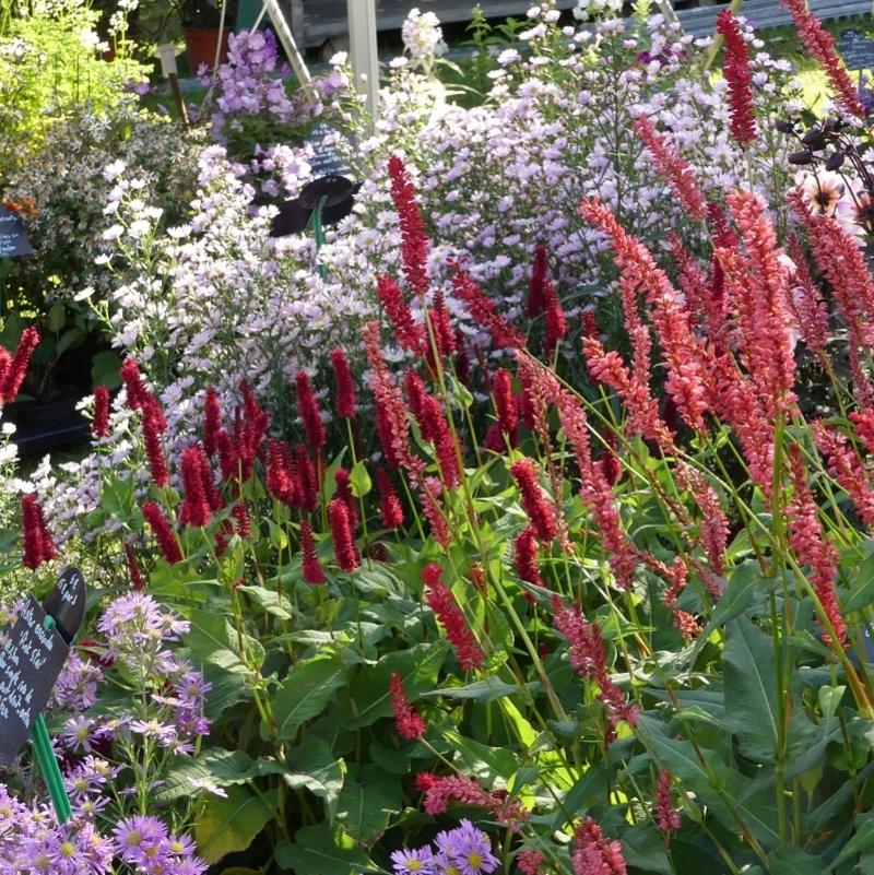 Journées des Plantes de Chantilly : automne en couleurs