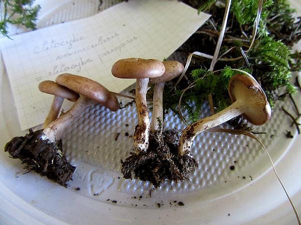 Une journée avec la Société Mycologique du Châtillonnais...