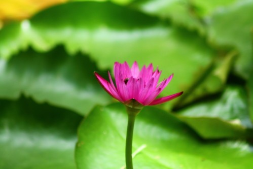 fleurs-4008.JPG