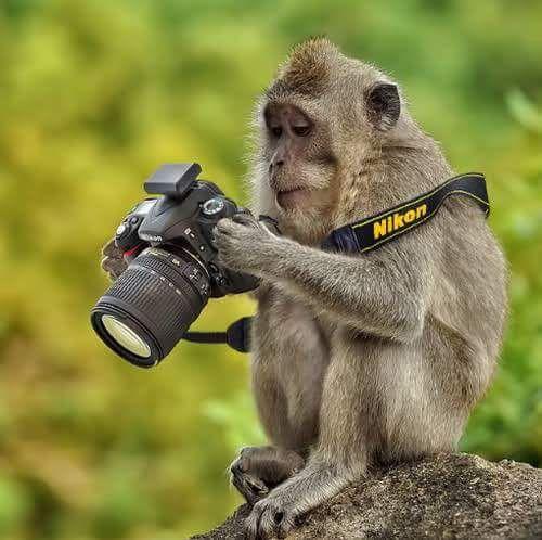 Un vendredi singe...hi hi