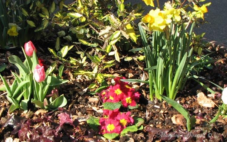 Colmar : Le printemps en ville