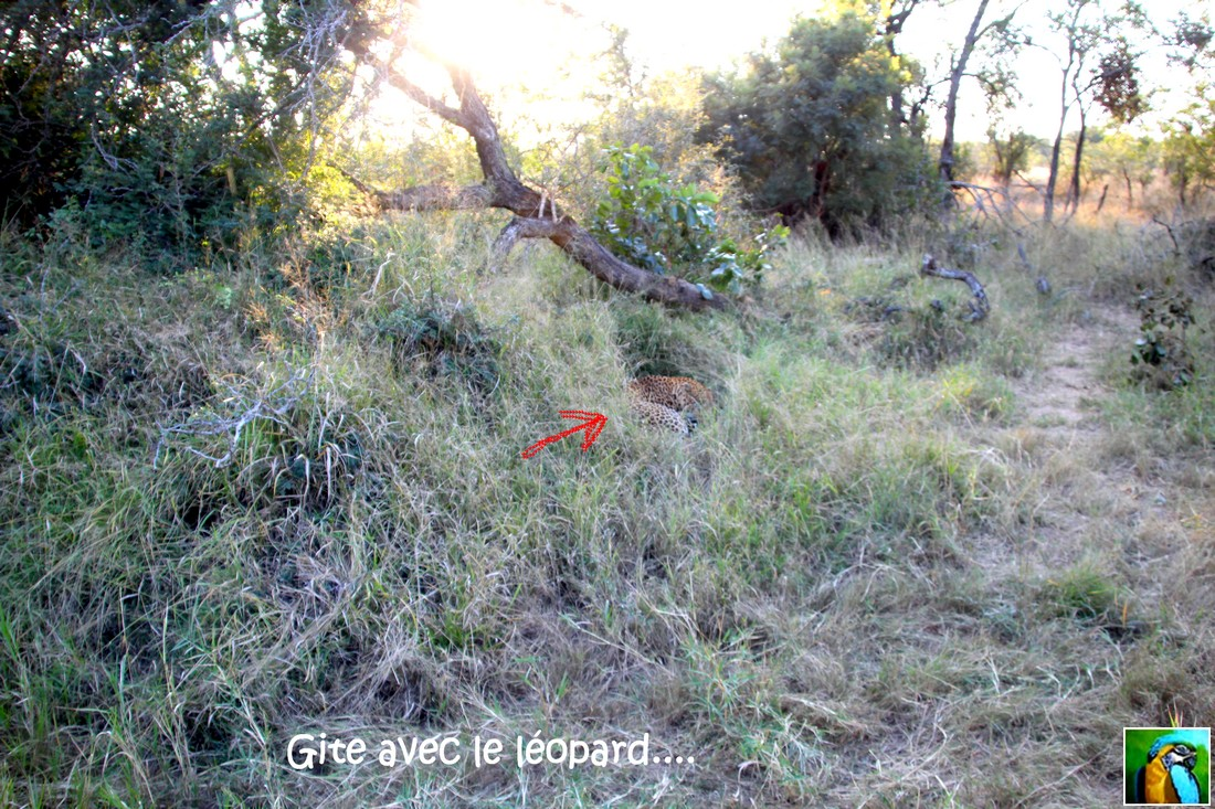 Afrique du Sud:juin 2018: découverte d'un gite 1/3