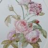 Roses et oeillets