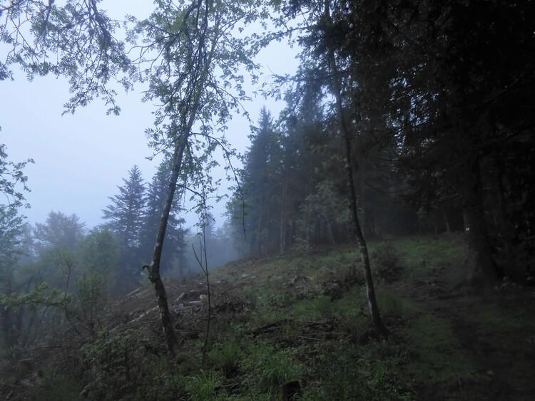 Vosges- vers le Drumont embrumé