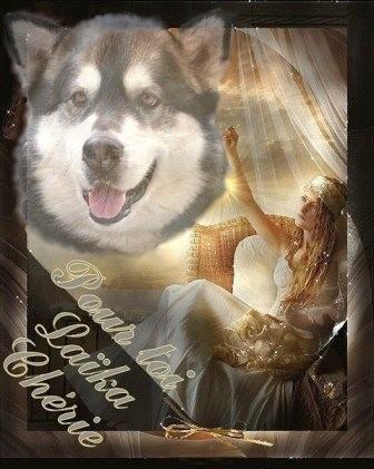 ♥ En hommage à ma Princesse adorée Laika ♥