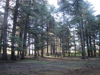522 Maroc Azrou Forêt de cèdres Le jour se lève