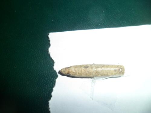 Bivalve, fossile de mollusque lamellibranche, pouvant  dater du Toarcien-  160 millions d'années