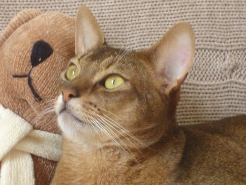Callis et son ours :