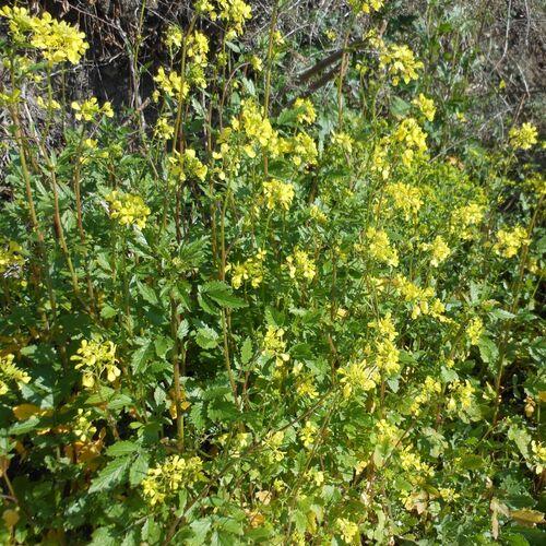 En février toutes les fleurs (ou presque) sont jaunes