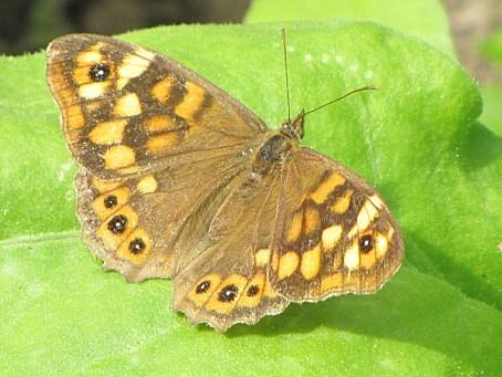 les-papillons-6454.JPG