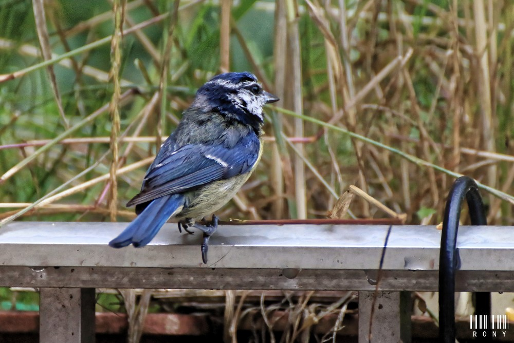 Oiseau de mon jardin