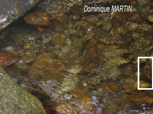 Les émanants de Dominique MARTIN : photos exceptionnelles