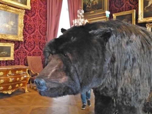 Dans la peau de l'ours Poincheval tête