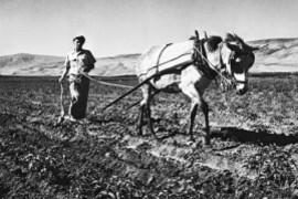 Kibboutz-un-siecle-pour-batir-Israel_article_popin.jpg
