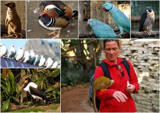 monde des oiseaux