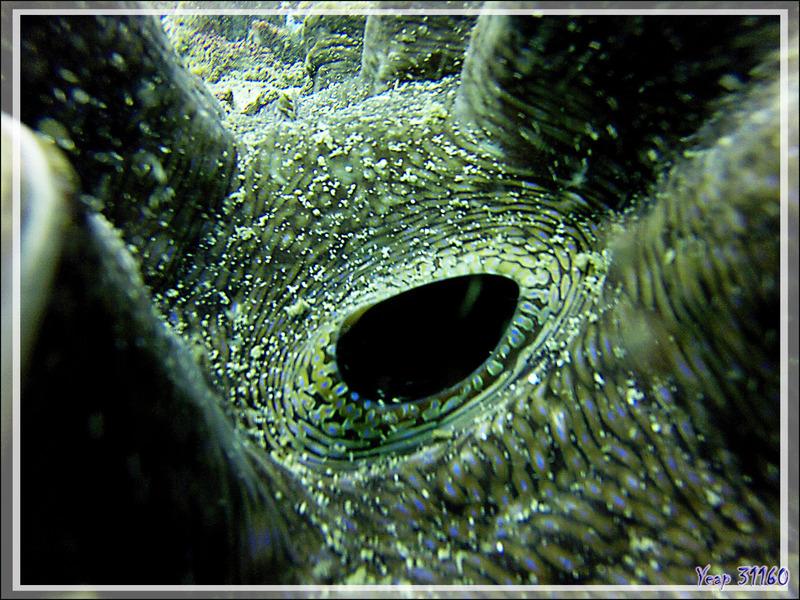 Dans l'œil du bénitier - Nosy Mitsio - Madagascar