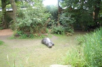 Zoo Duisburg 2012 792