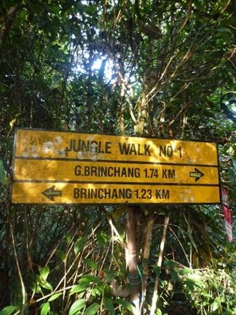 Jungle treck n°1